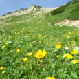 鉢ヶ岳のお花畑