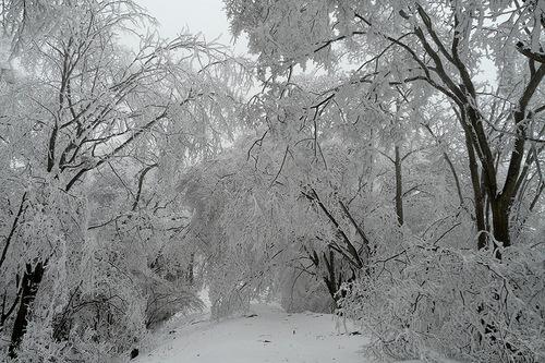 氷のアーケード